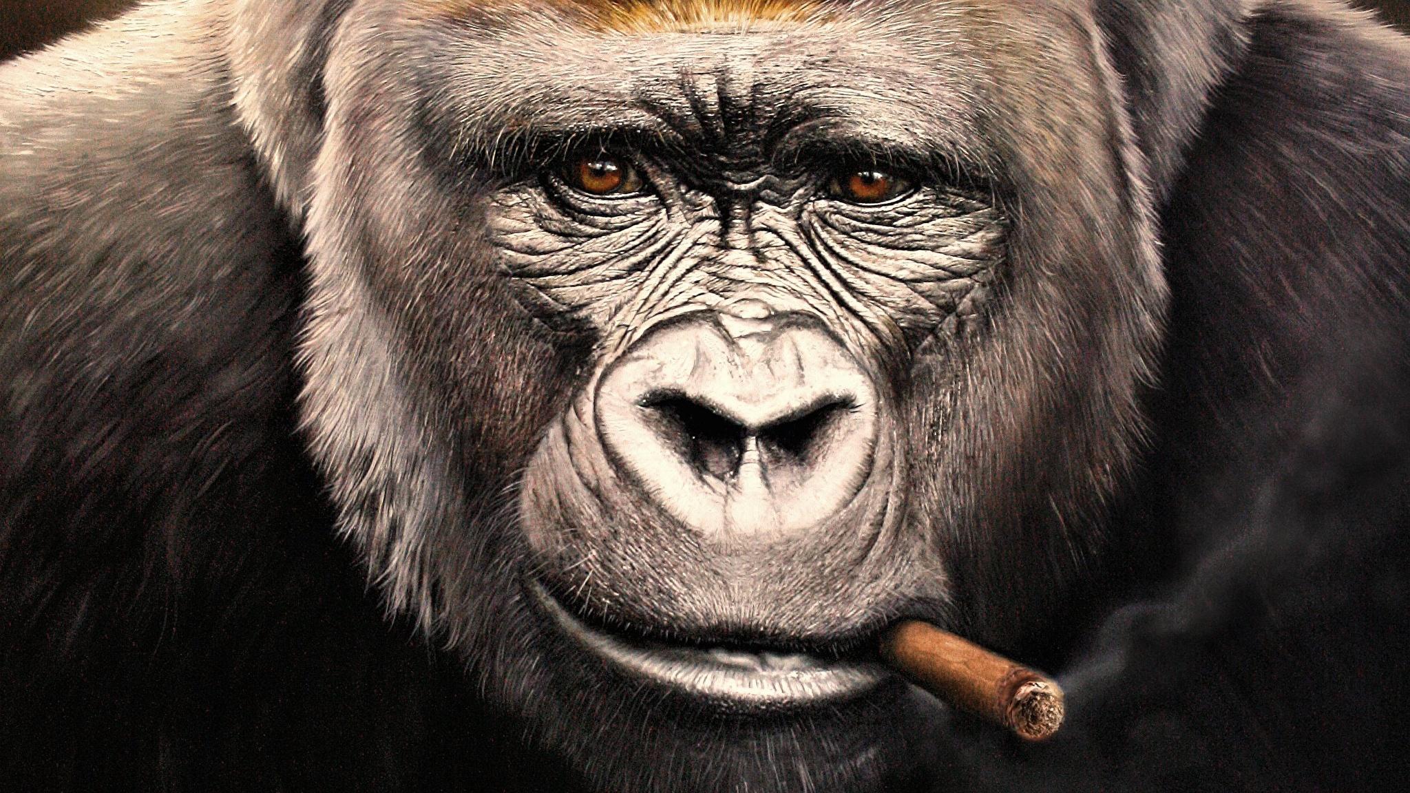 パチンカス猿や